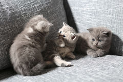 Cute baby kittens Royalty Free Stock Photo