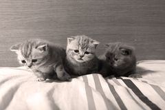 Cute baby kittens Royalty Free Stock Images