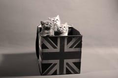 Cute baby kittens Stock Photo