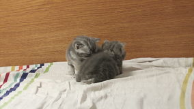 Cute baby kittens playing on the bed stock footage