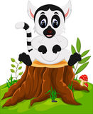 Cute baby lemur Royalty Free Stock Images