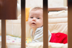 Cute baby lying on his stomach in his bed. Stock Images