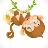 Cute baby monkey with banana hanging on the vine Royalty Free Stock Photography