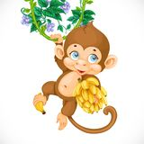 Cute baby monkey with banana Stock Image