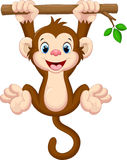Cute baby monkey hanging on tree Royalty Free Stock Photography