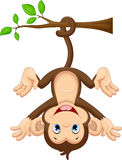 Cute baby monkey hanging on tree Royalty Free Stock Photo