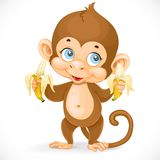 Cute baby monkey with two bananas stand Stock Photos