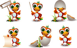 Cute baby parrots cartoon set Stock Images