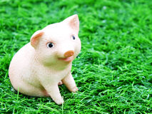 Cute baby piglet doll Royalty Free Stock Image