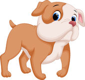 Cute baby pit bull cartoon Stock Image