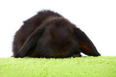 Cute baby rabbit Stock Images