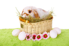 Cute baby rabbit. Cute baby Easter rabbit in basket with eggs and flowers isolated on white Stock Image