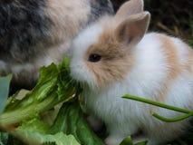 Cute baby rabbit Stock Image