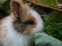 Cute baby rabbit Royalty Free Stock Photo