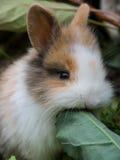 Cute baby rabbit Royalty Free Stock Photography