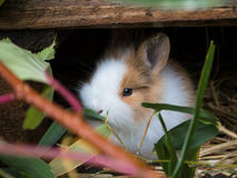 Cute baby rabbit Royalty Free Stock Images