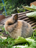 Cute baby rabbit. Cute  rabbit eating vegetables close-up Stock Photo