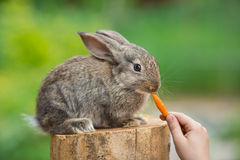 Cute Baby Rabbit. Feeding animal Stock Photo