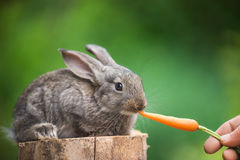 Cute Baby Rabbit. Feeding animal Royalty Free Stock Photos