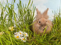 Cute baby rabbit in grass Stock Images