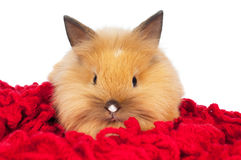 Cute baby rabbit isolated stock photos