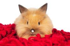 Cute baby rabbit isolated Stock Photos
