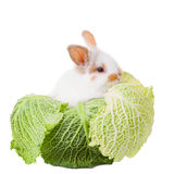 Cute baby rabbit sitting in green cabbage  Stock Photo