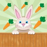 Cute baby rabbit surrounded with carrots Stock Images