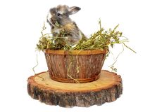 Cute baby rabbit in a wooden basket with dry grass. Cute baby rabbit in wooden basket with dry grass royalty free stock photography