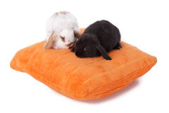 Cute baby rabbits. On pillow isolated on white royalty free stock image