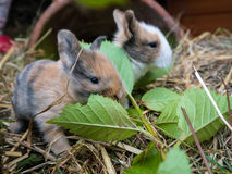 Cute baby rabbits Stock Images