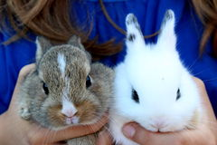 Cute baby rabbits. Two cute baby rabbits together Stock Photos