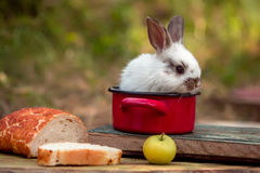 Cute baby rabit in red pot among the food Stock Photo
