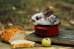 Cute baby rabit in red pot among the food. Little bunny looks for a tasty meal. Cute baby rabit in small red pot among the food Royalty Free Stock Photo