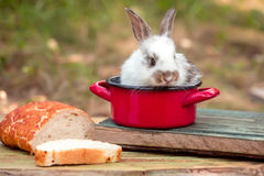 Cute baby rabit in red pot among the food. Cute baby rabit in small red pot among the food. Little bunny looks for a tasty meal Stock Image