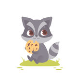 Cute baby raccoon sitting, eating a cookie. Royalty Free Stock Photography