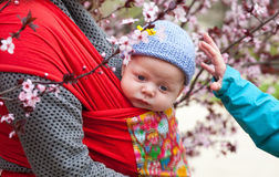 Cute baby in sling scarf Stock Images