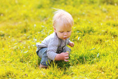 Cute baby in sunny summer meadow Royalty Free Stock Photography