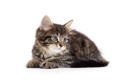 Cute baby tabby kitten on white Royalty Free Stock Photo