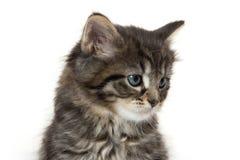 Cute baby tabby kitten on white Stock Photos