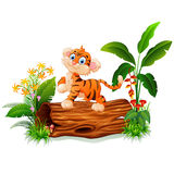 Cute baby tiger posing on tree trunk Stock Photo