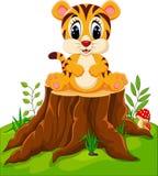 Cute baby tiger sitting. On tree stump Stock Photos