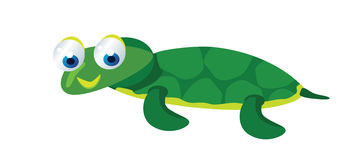 Cute baby turtle Stock Photo