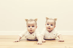 Cute baby twin sisters on wooden floor wearing funny cat's ears headbands Stock Photo