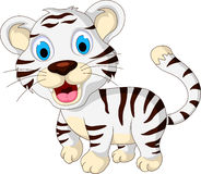 Cute baby white tiger walking Stock Image
