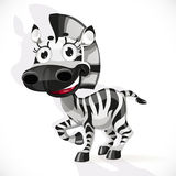 Cute baby zebra Royalty Free Stock Photo