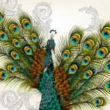 Cute background with vector detailed pair of  peacocks on white Stock Photography