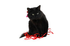 Cute balck cat gift Royalty Free Stock Photography