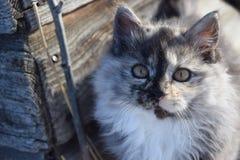 Cute barn cat Royalty Free Stock Photos