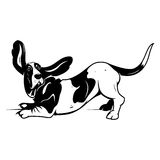 Cute Basset Hound Royalty Free Stock Photos